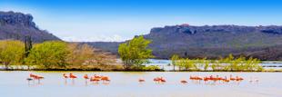 Flamingo's in het water in Curacao