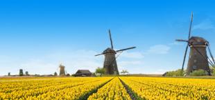 Gele tulpenvelden met windmolens in Nederland