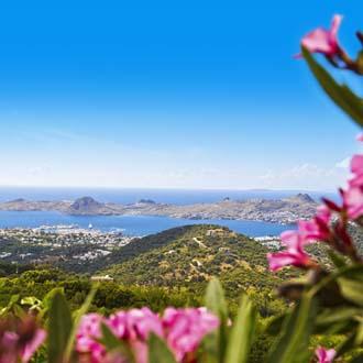 Uitzicht vanaf een berg met roze bloemen op de zee