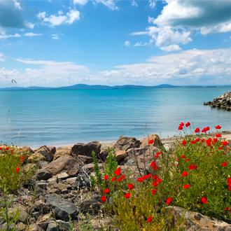 Kust met rode bloemetjes in Pomorie