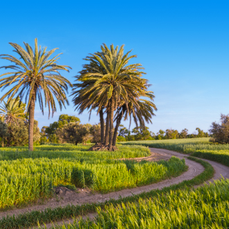 Palmbomen in Larnaca, Cyprus