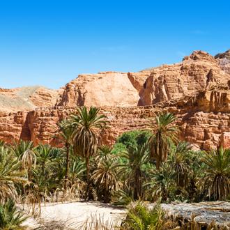 Uitzicht op de bergen en palmbomen in Egypte
