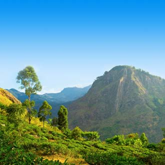Rots bij Ella in groene natuur Sri Lanka