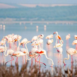 Flamingo's in Fuente de Piedra, Malaga