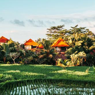 Huisjes met oranje daken omgeven met natuur in Ubud op Bali, Indonesie