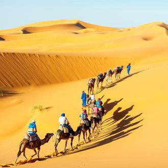 Kamelen in de Sahara woestijn in Marokko