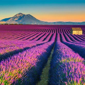 Paars lavendelveld met berg op de achtergrond in Provence