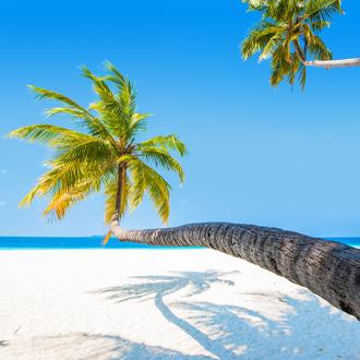Strand met palmboom op Zuid Male atol