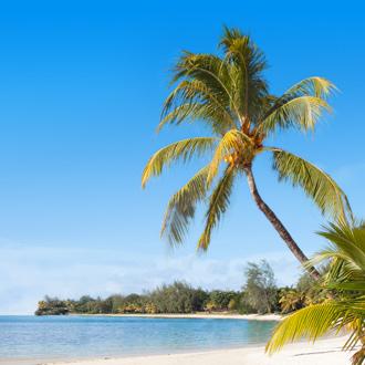 Palmbomen en het strand in Mauritius