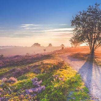 Landschap in Drenthe met prachtige zonsopgang