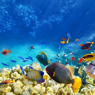Onderwaterwereld met gekleurde vissen