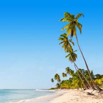 Palmbomen op zandstrand in de Dominicaanse Republiek