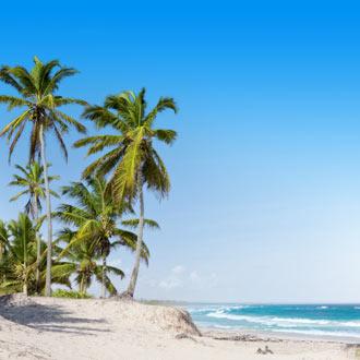 Palmbomen in Punta Cana