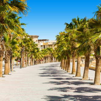 Palmbomen langs de boulevard in Sahl Hasheesh, Egypte