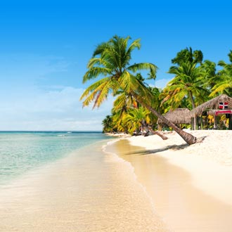 Palmboom op het strand van Saona Island, Punta Cana