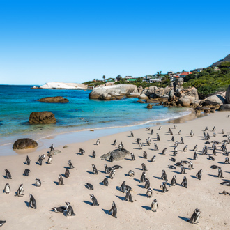 Pinguïns op het strand vlakbij Kaapstad