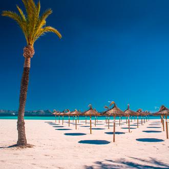 Tropisch strand van Playa de Muro met palmboom parasols, Mallorca