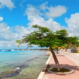 Divi Divi boom aan de promenade bij zee in Kralendijk Bonaire