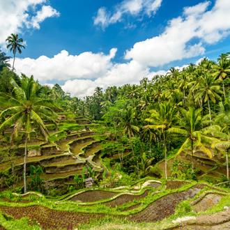 Een rijstveld dat door palmbomen wordt omgeven in Ubud op Bali