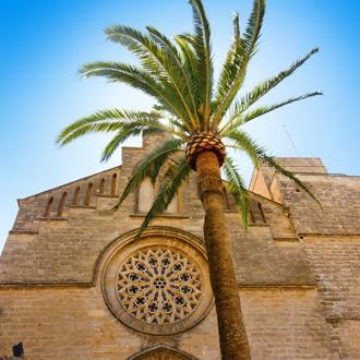 Sant Jaume kerk met palmboom in Alcudia Mallorca