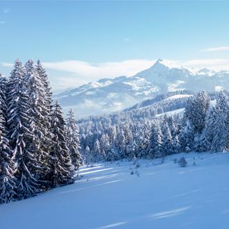 Skigebied met besneeuwde bomen in de Kitzbuheler Alpen