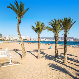 Palmbomen op het strand van Benidorm, Spanje