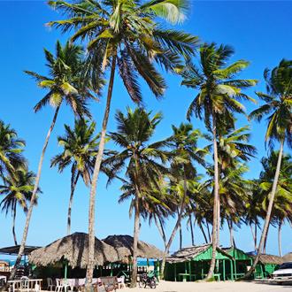 Een strand aan de Noordkust van de Dominicaanse Republiek met palmbomen vlakbij Playa Dorada