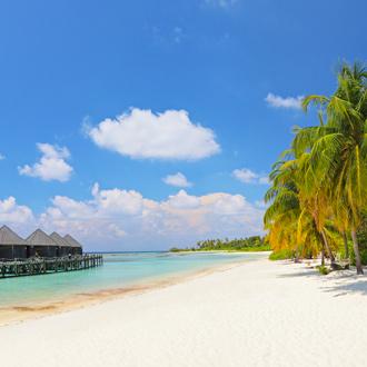 Wit strand met grote palmbomen, zee en waterbungalows Lhaviyani Atol