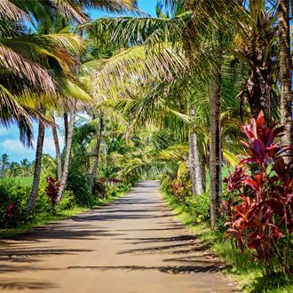 Een vakantieroute met palmbomen in Mauritius