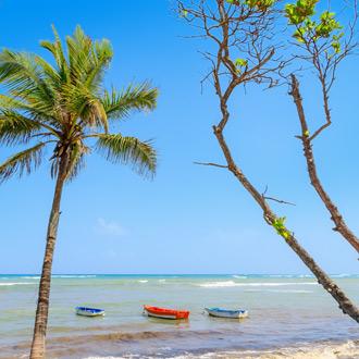 Vissersboten met palmbomen in Puerto Plata, Dominicaanse Republiek