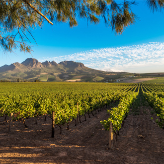 Wijnlanden bij Stellenbosch in de omgeving van Kaapstad