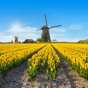 Vakantie in de bollenstreek in Nederland