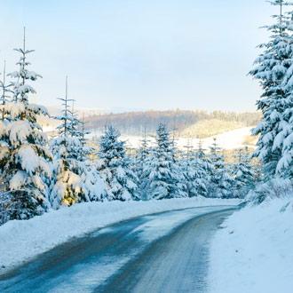 Dennenbomen in de sneeuw in Sauerland