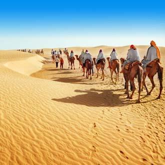 Kamelen in de woestijn in Marokko