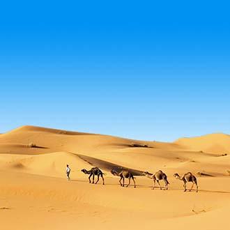 Woestijn met kamelen in Tunesie