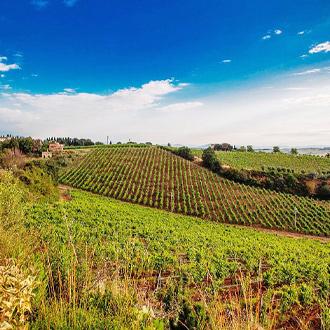Foto van de wijngaarden en landschap van Tavarnelle Val di Pesa