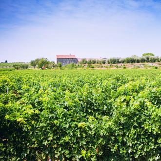 Groene Italiaanse wijngaard in Bardolino