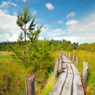 Een houten looppad in het Nationale Park Dwingelderveld