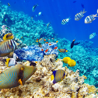 Prachtige onderwaterwereld met tropische vissen in Egypte