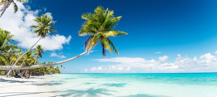 Tropische vakantie met palmboom en helderblauw zeewater