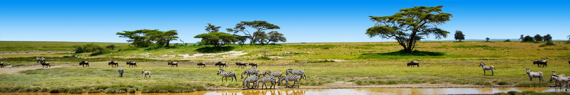 Natuur en zebras in Tanzania